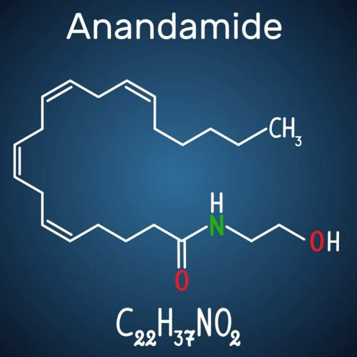 chemical structure of anandamide