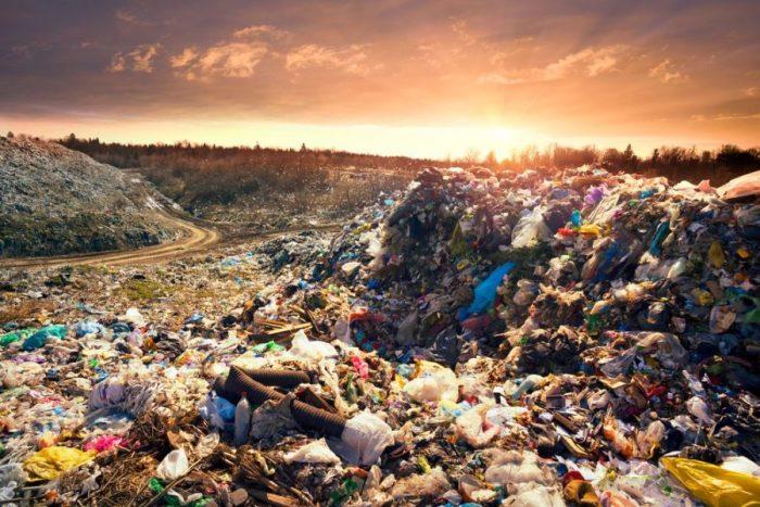 plantable cup, trash, eco-friendly, sustainability, seeds, ecosystem, California, Alex Henige, USA, compostable, coffee cups, landfills, plastics, styrofoam