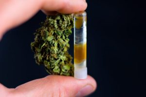 cannabis, cannabis tincture, cannabis extract, CBD, THC, strain, DIY, epilepsy, anxiety, dose, prescription, medical cannabis, CBD oil