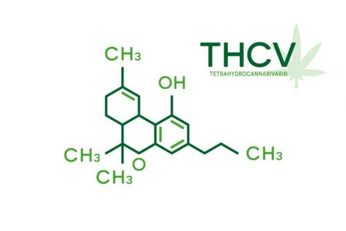 cannabinoids, cannabinoid pathways, cannabis, medical cannabis, THCV, CBG, CBGa, CBD, CBDa, THC, THCa, THCVa