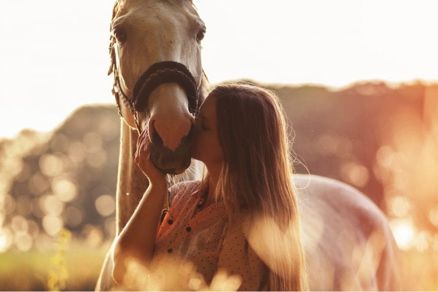 cannabis, CBD for horses, horse, CBD for pets, cannabis for pets, horses, endocannabinoid system, inflammation, anxiety