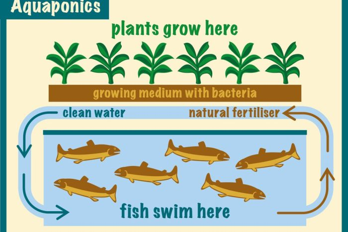 an aquaponics system at work in a graphic