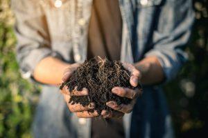 living soil in gardener's hands