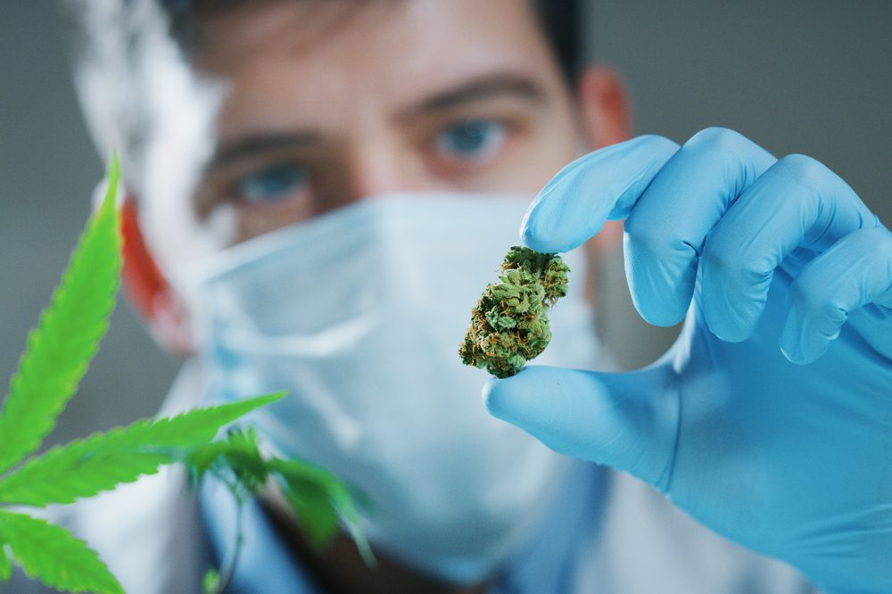 scientist holding cannabis bud
