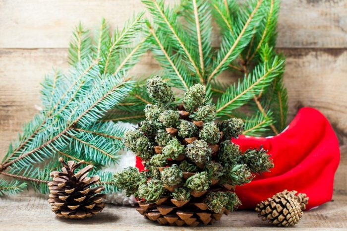 cannabis christmas calendar will have lots of indulgences like this stocking full of nugs in it