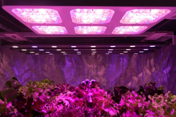 led grow lights contributing to plant health