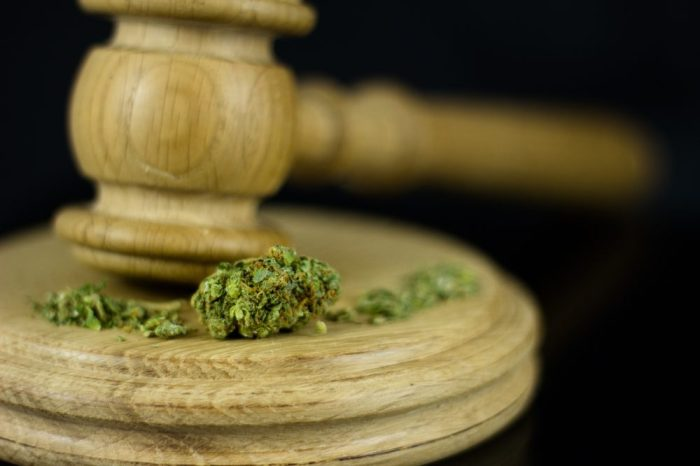 cannabis law reform represented by gavel and buds