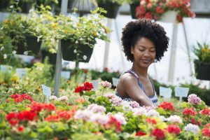 geraniol growing in the geraniums in the garden of this woman of african descent