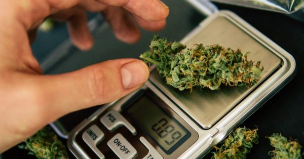 black market cannabis being weighed on a scale