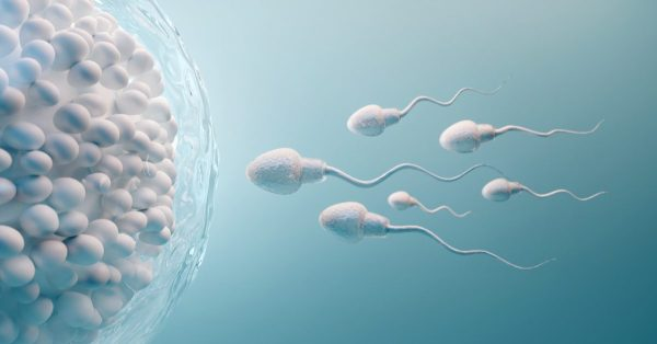 sperm development healthy sperm to ova