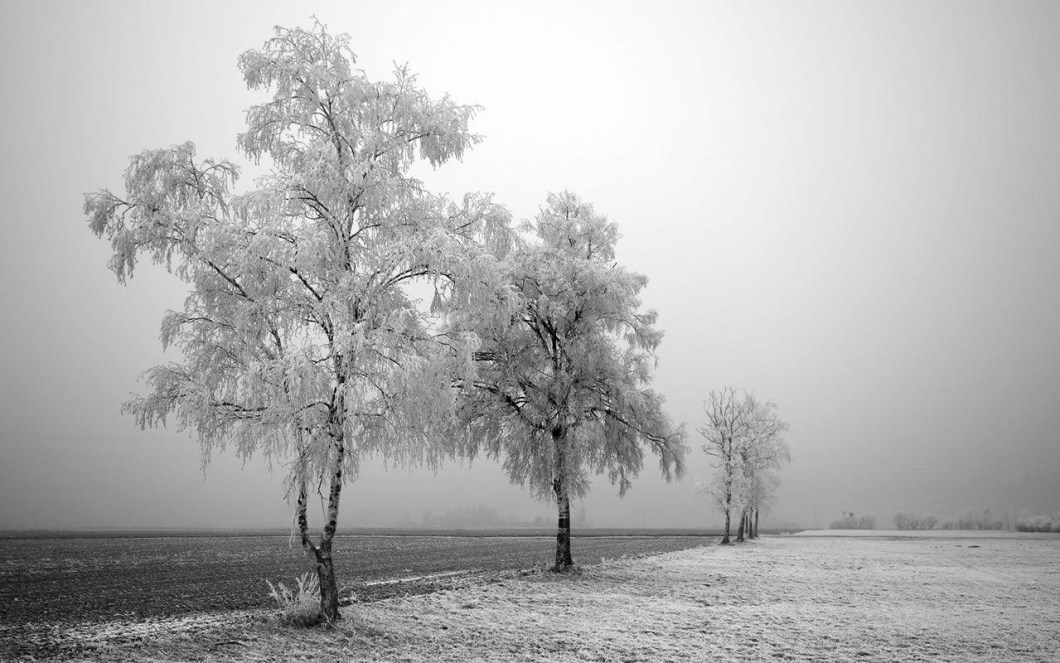 10 Most Por Black And White Nature Background Full Hd 1080p For