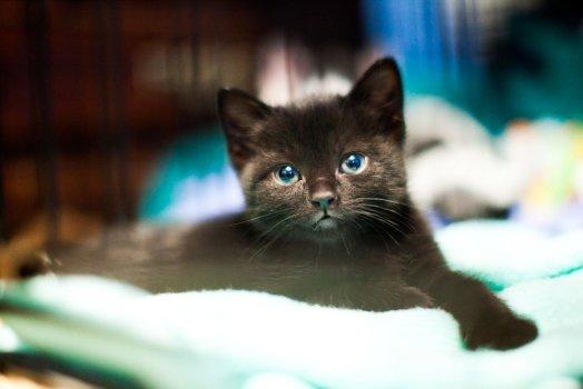 KHS Foster Kitten