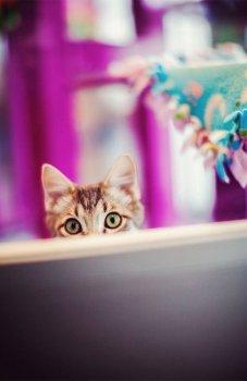 KHS Cat