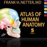 netters anatomy 5th edition