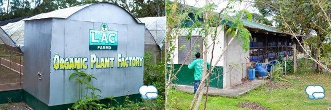 Lagundi Farm 4