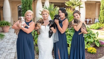 Bridesmaids and bride holding the puppies - 21 Main Events - North Myrtle Beach