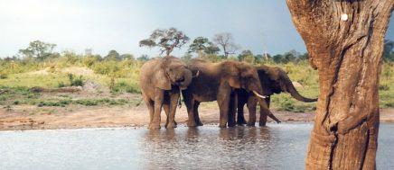 Objevte na vlastní oči zvířata, která žijí v Africe