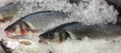 Sea_Bass_for_sale