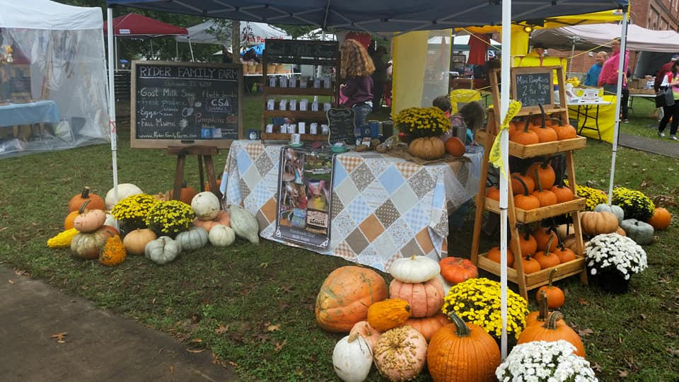 Southern Illinois mums & pumpkin patch