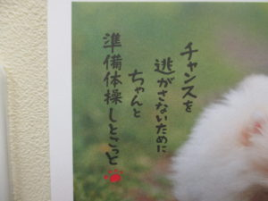 IMG_3170[1]   習志野動物醫療センター りょう動物病院