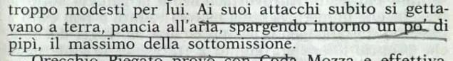 Gianni Padoan - Il Branco Della Rosa Canina - pag. 71