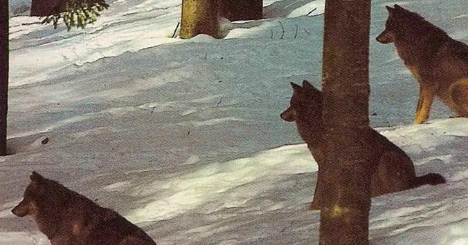 Il branco della rosa canina – Gianni Padoan (citazioni)