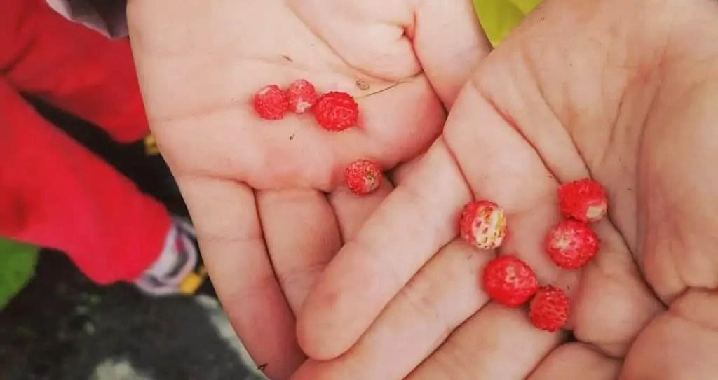 Frutti di bosco di Valbione