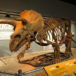 国立自然史博物館恐竜の化石展示室