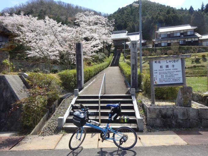 松隣寺の桜