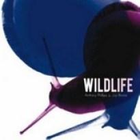 Anthony-Phillips-Wildlife