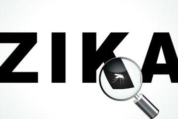 Zika pode provocar infertilidade em homens, indica um novo estudo