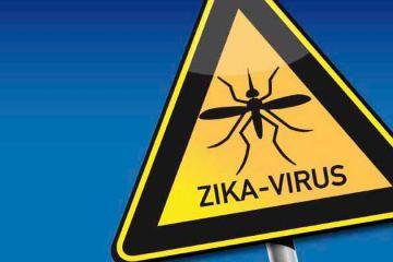 Pessoas que já tiveram dengue teriam menos chance de ter Zika, diz estudo