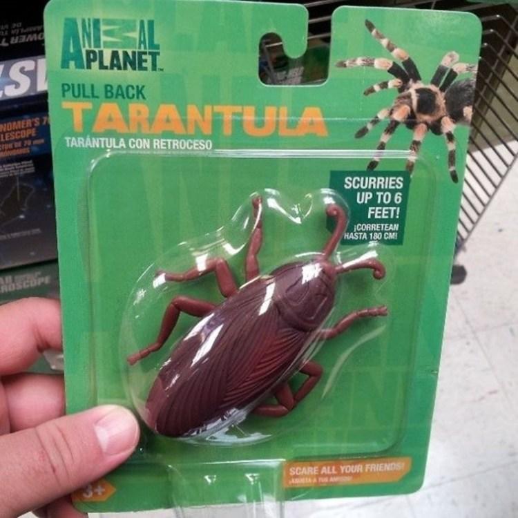 5 - Barata de plástico dando as caras na embalagem de uma aranha