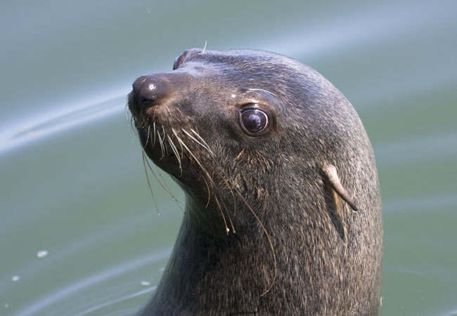 Seal Trips In South Africa