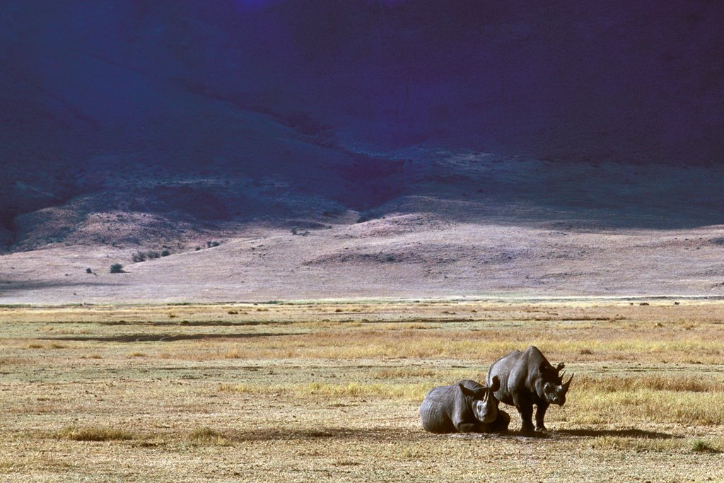 Ngorongoro-National-Park-Tanzania-Tour-Safari (5)
