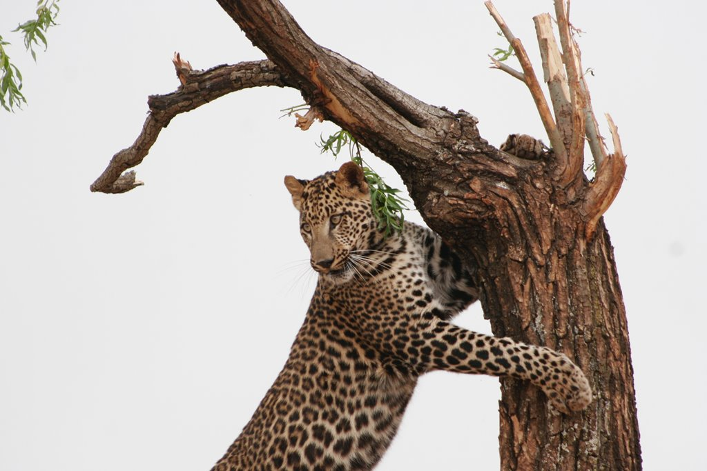 South Africa Animals - Wildlife in South Africa (12)