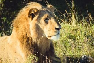 Kwantu Game Reserve