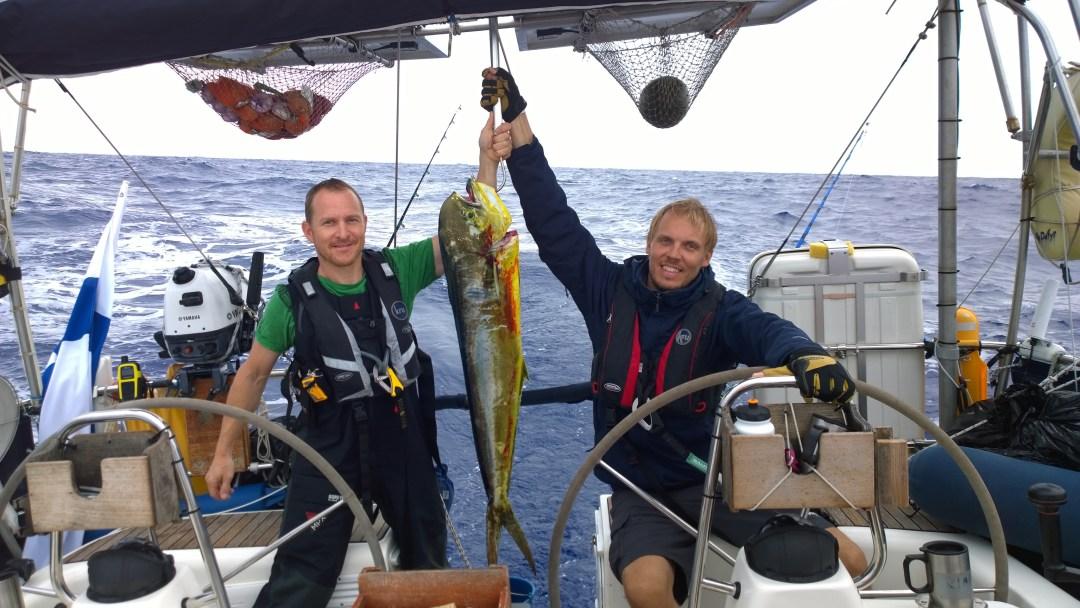 Dorado hilattu veneeseen! 7,5 kg!