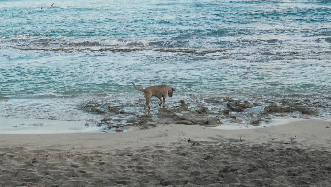 Martiniquella saimma rannalle seuraksi myös koiran.