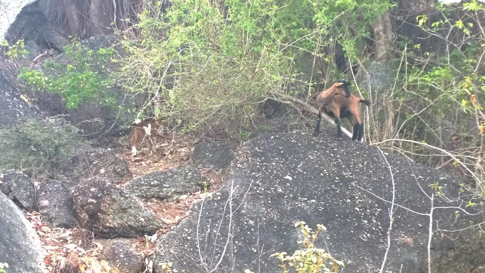Pikkuiset kilipukit polun varrella. Koko Jost Van Dyken saari oli täynnä pikkukilejä.