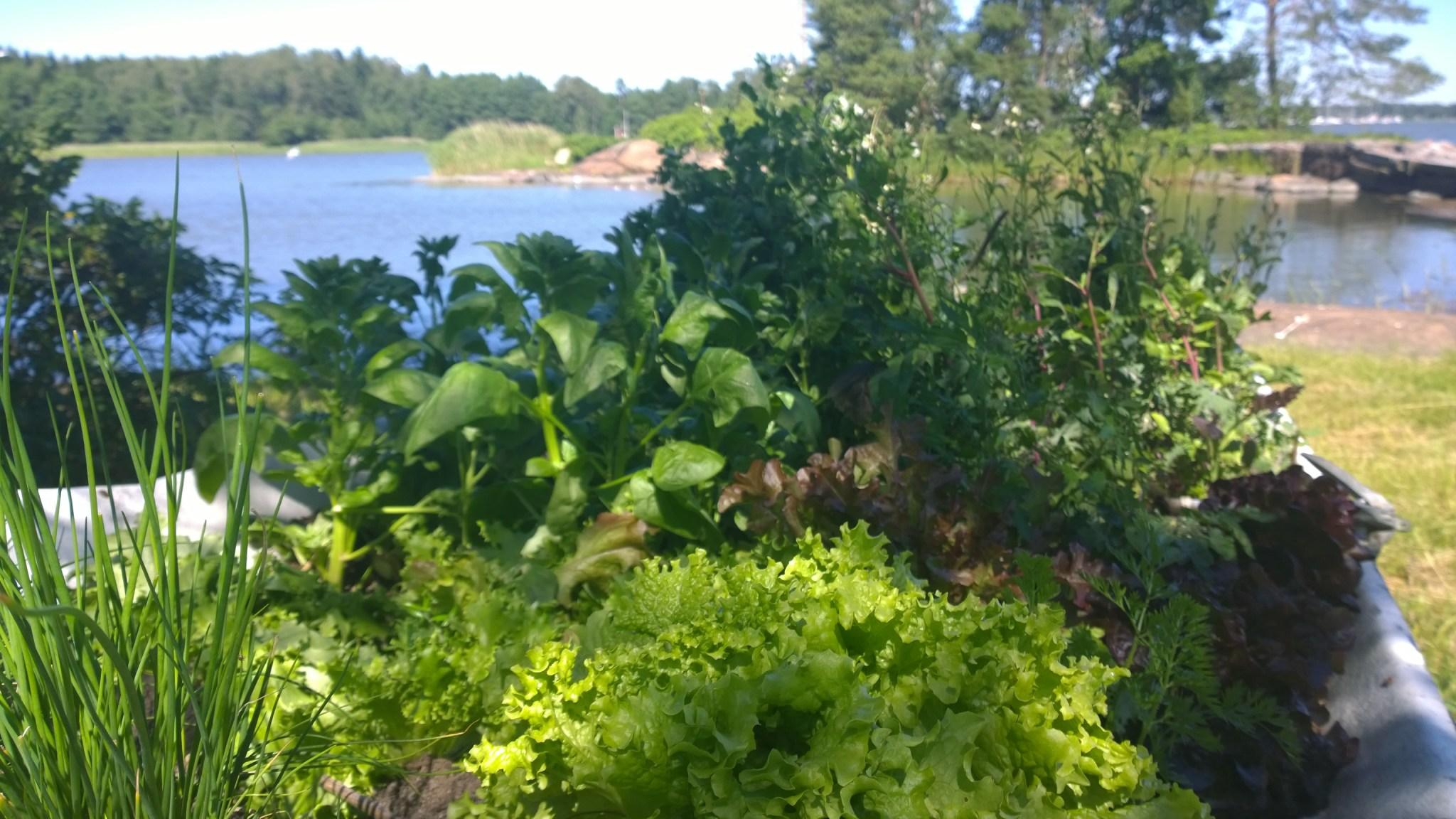 Salaattipaatti kesällä 2014