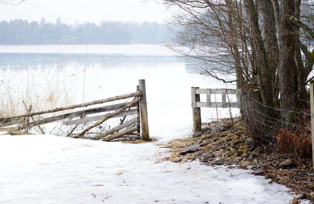 Saaressa on paljon lampaita. Ne ovat vielä talvilaitumilla ja kaikki portit olivat auki. Myös Kuggön pohjoispuolella oli vielä vähän jäätä.