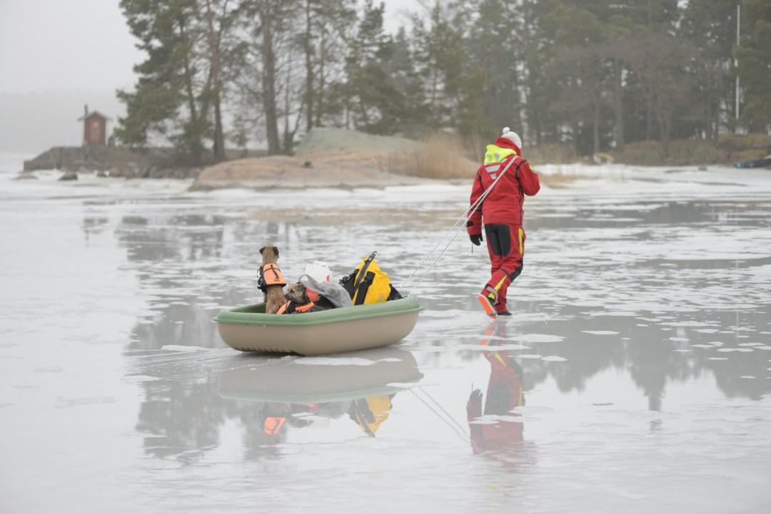 Kotona oli vettä jään päällä sen verran, että koirat liukastelivat jäällä. Nostin ne sitten kelirikkoveneeseen kyytiin tavaroiden kanssa,
