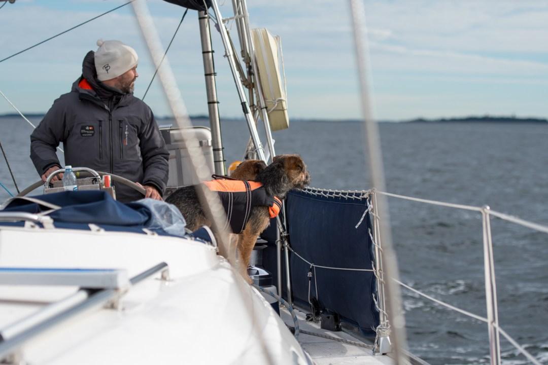 Koirat osallistuu purjehdukseen.