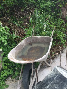 A wheelbarrow left to collect water, mosquito larvae was found in the water.