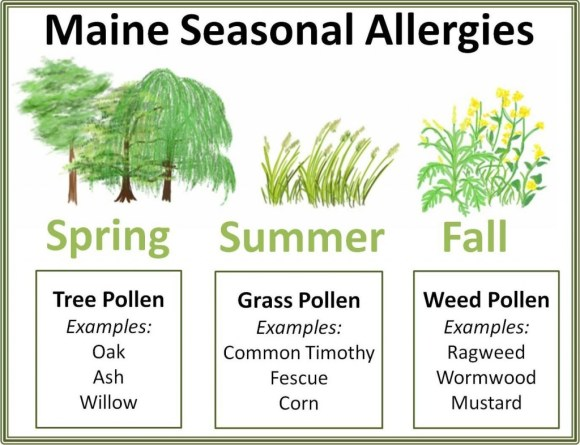 Major Causes of Pollen Allergy image