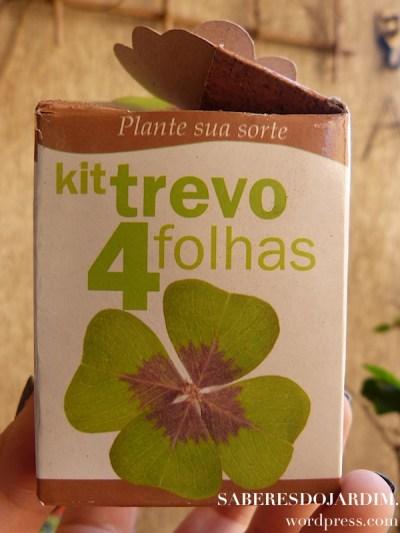 Oxalis - Trevo de 4 folhas