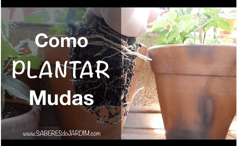 Vídeo – Como Plantar Mudas