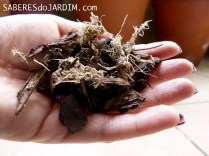 Mistura de Casca de Pinus, Carvão e Musgo Sphagnum para orquídea