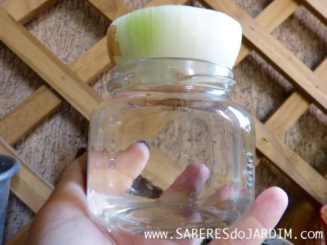 Como Plantar Cebolas